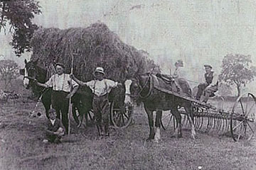gathering-hay